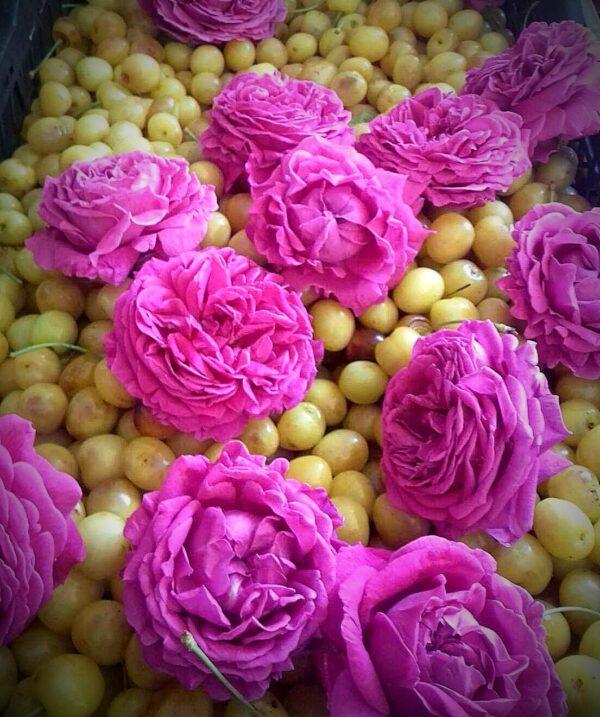 cirese trandafiri